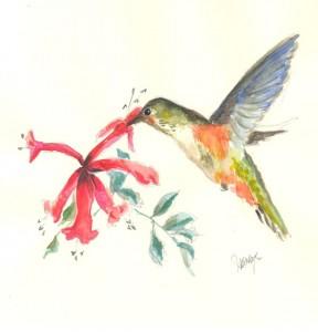 Watercolor drawing of hummingbird Rev 2
