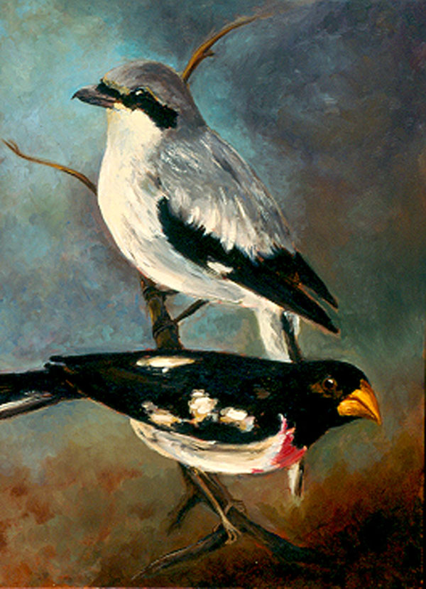 """Shrike and Rose Grosbeak"""