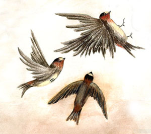 """Swallows Three"