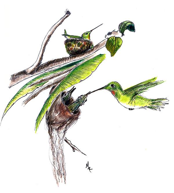 """""""Hummingbird Babies"""""""