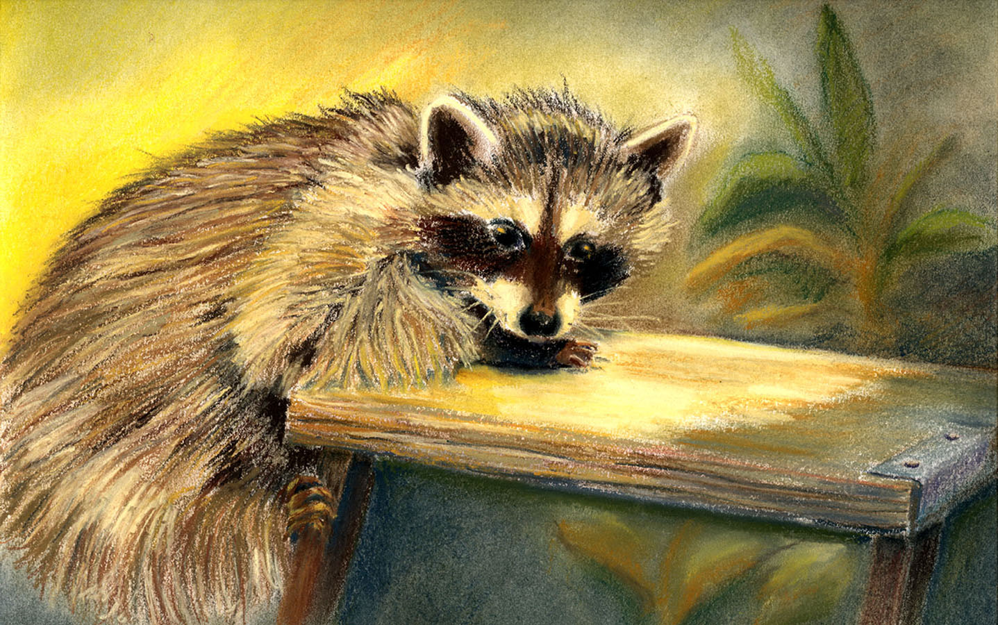 Racoon Ladder""