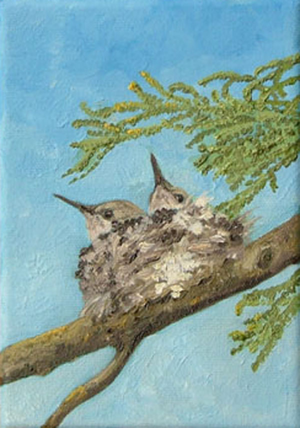 """Anna's Humminbird Nestlings"""