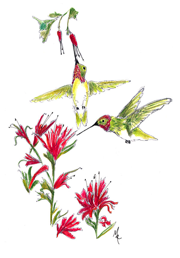 """Hummingbird Garden"""