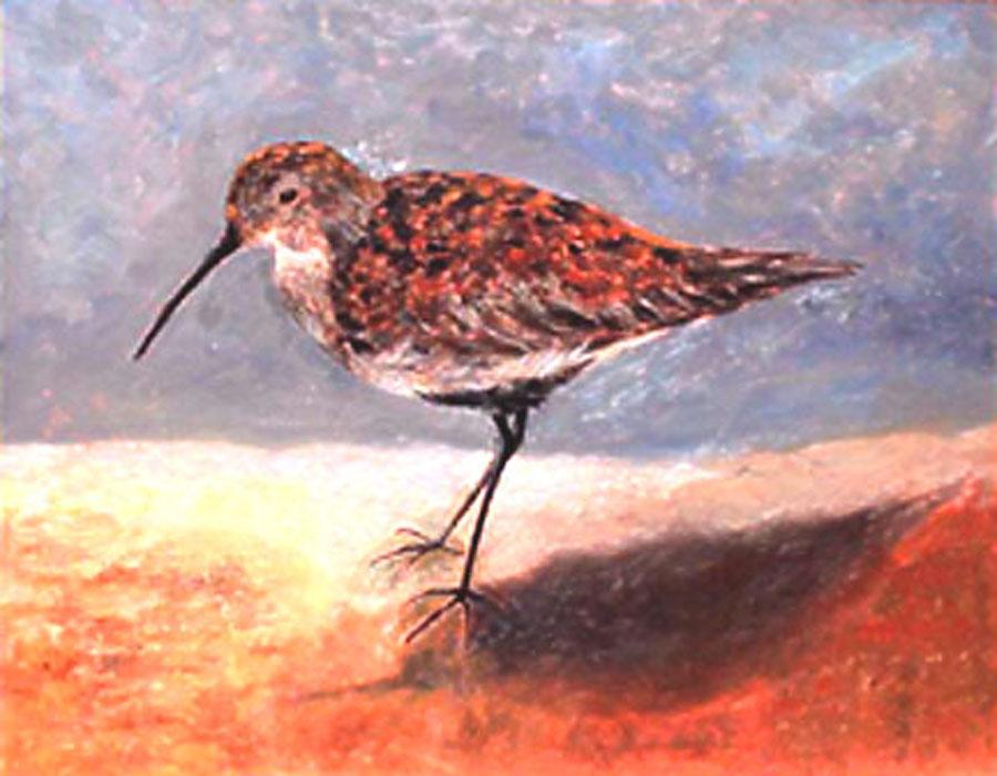 """""""Shore Bird"""""""
