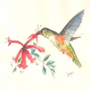 Watercolor drawing of hummingbird