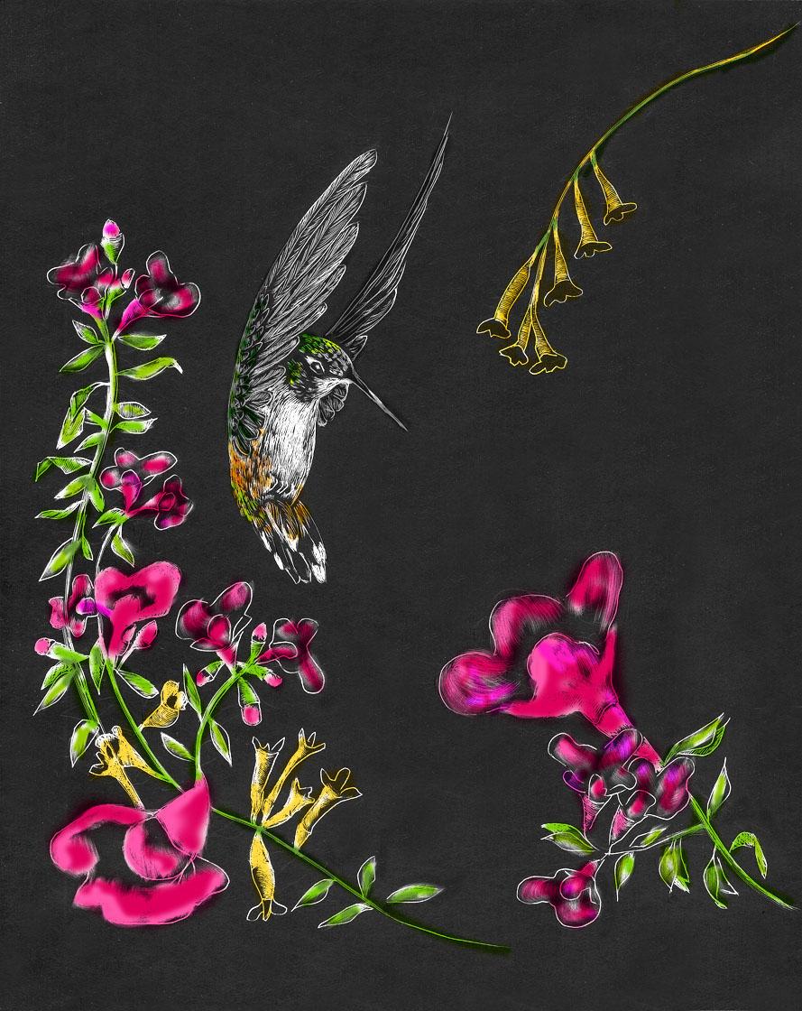 """Hummingbird Garden II"""
