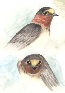 """Cliff Swallow Totem"""